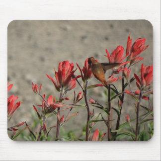 Hummingbirdkardinalblommor Musmatta