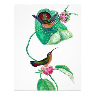 Hummingbirdkärlek Brevhuvud