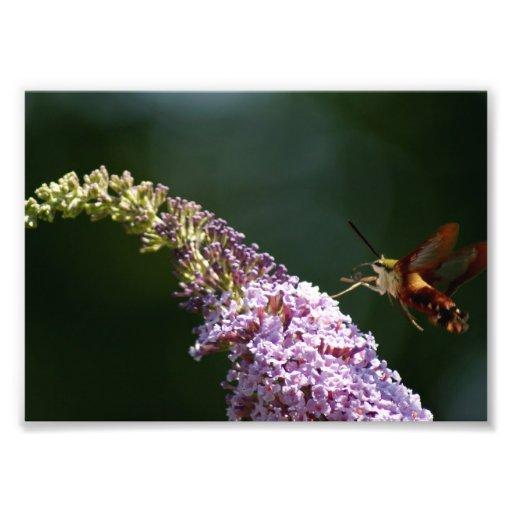 HummingBirdmal fotografiskt tryck 7 x 5