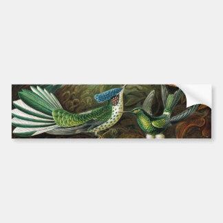 Hummingbirds Bildekal