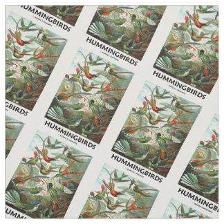Hummingbirds Ernest Haeckel Artforms av naturen