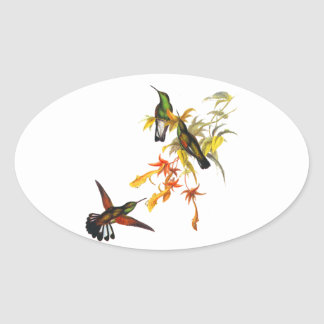 Hummingbirds Ovalt Klistermärke