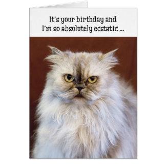 Humoristiskt födelsedagkort - extatisk perserkatt hälsningskort