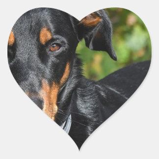 Hund Beauceron Hjärtformat Klistermärke
