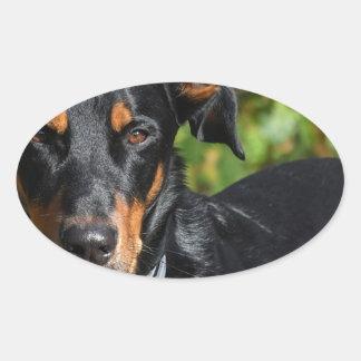 Hund Beauceron Ovalt Klistermärke
