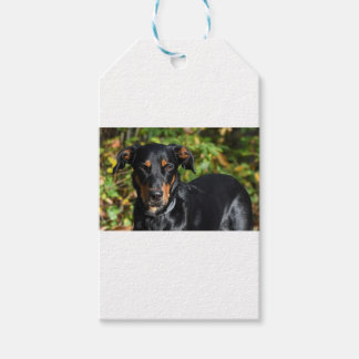 Hund Beauceron Presentetikett