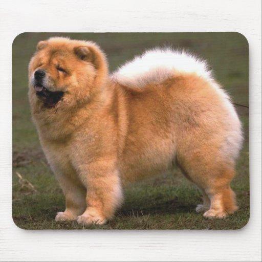 Hund för ChowChow Mus Matta