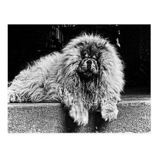 Hund för ChowChow på farstubron som är svartvit Vykort