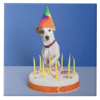 Hund för jackRussell Terrier som ha på sig Kakelplatta
