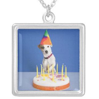 Hund för jackRussell Terrier som ha på sig Silverpläterat Halsband
