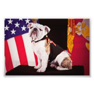 Hund för maskot för bulldoggmarin officiell fototryck