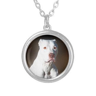 Hund för rädding för vitamerikanPitbull Terrier Silverpläterat Halsband