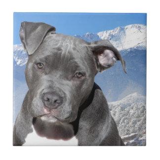 Hund för valp för amerikanPitbull Terrier Kakelplatta