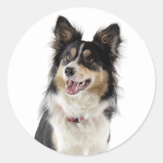 Hund för valp för Collie för kärlekTri-Färg gräns Runt Klistermärke