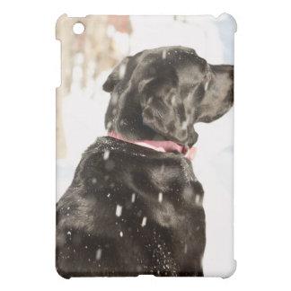 Hund i snö iPad mini skal