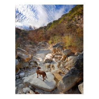 Hund i torr Barton bäck - Austin Texas Vykort