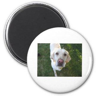 hund Labrador Retriever Magnet