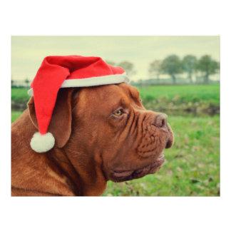 Hund med den Santa hatten Personliga Flygblad