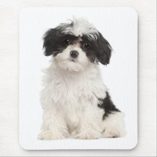 Hund Mousepad för kärlekHavanese valp Mus Mattor