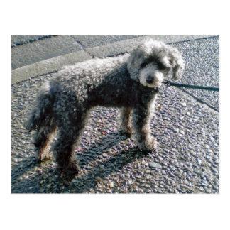 Hund namngav Louis Vykort