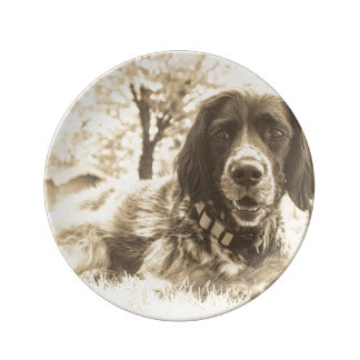 hund porslinstallrik
