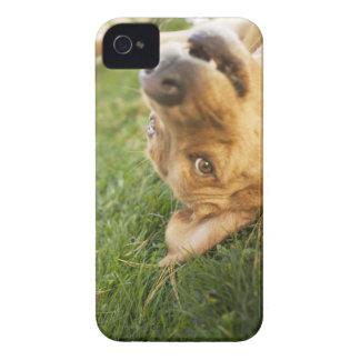 Hund som är rullande på baksida iPhone 4 Case-Mate skydd
