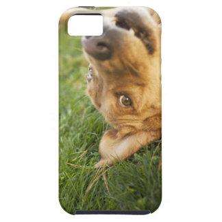 Hund som är rullande på baksida iPhone 5 cases