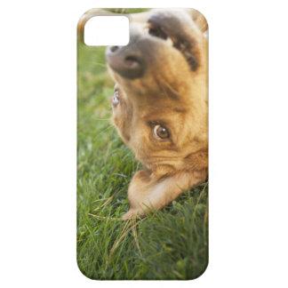 Hund som är rullande på baksida iPhone 5 fodraler