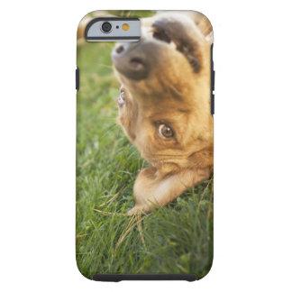 Hund som är rullande på baksida tough iPhone 6 fodral