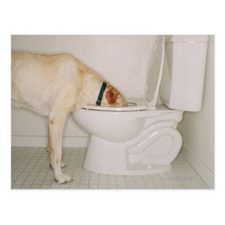 Hund som dricker ut ur toalett vykort