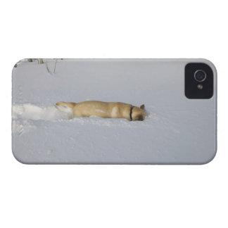 Hund som gräver i snö iPhone 4 cases
