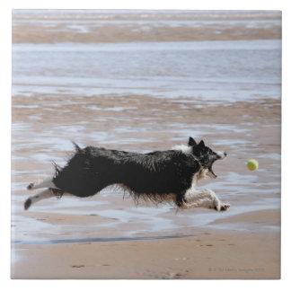 Hund som jagar en boll på stranden kakelplatta