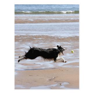 Hund som jagar en boll på stranden vykort