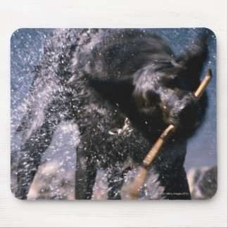 Hund som skakar vatten från hans lag musmatta