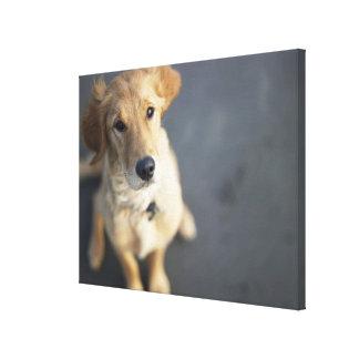 Hund som tittar upp canvastryck