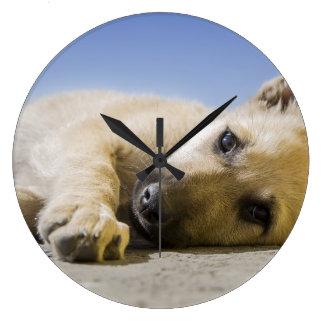 hund stor rund klocka