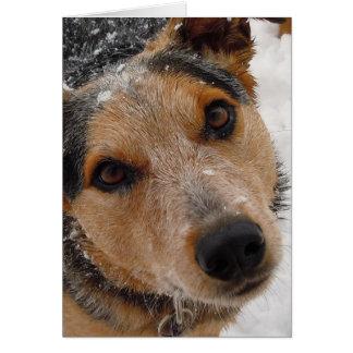 Hund- studenten för Vetstudentgrattis Hälsningskort