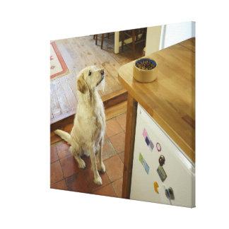 Hund tittar mat på tabellen canvastryck