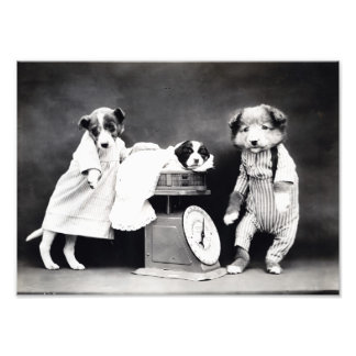 Hundar för vintage B&W i kläder med Fototryck