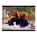 Hundar på grinden vykort