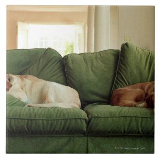 Hundar som sovar på soffan kakelplatta