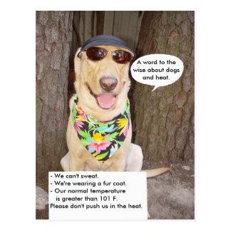 Hundar & värmer vykort