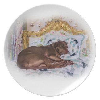 Hunden för den Labrador retrieveren som sovar, plä Tallrik