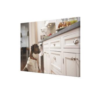 Hunden i kök tittar mat kontrar på canvastryck