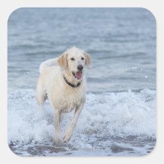 Hundspring i vatten på beach.en fyrkantigt klistermärke