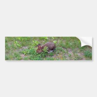 Hungrig kanin på gräsmatta bildekal