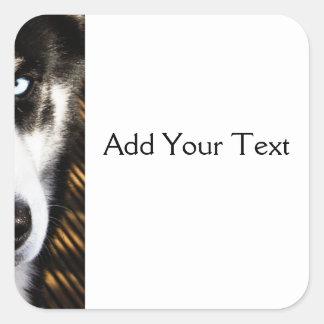 Husky gräns för hundblåttöga fyrkantigt klistermärke