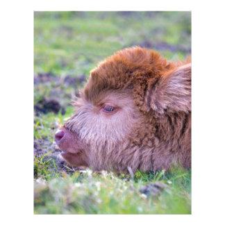 Huvud av den bruna nyfödda skotska brevhuvud