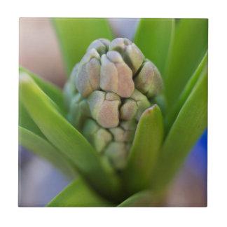 hyacint i trädgården kakelplatta