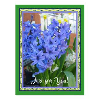 Hyacintblått Vykort